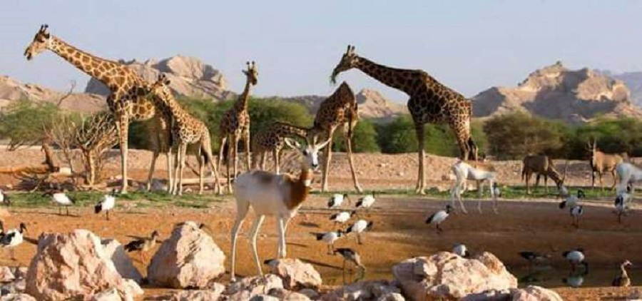 alain zoo ticket price 2018 alain zoo jobs al ain zoo ticket prices 2018 al ain zoo hotel al ain zoo credit card offers 2018 dubai zoo al ain zoo promo code